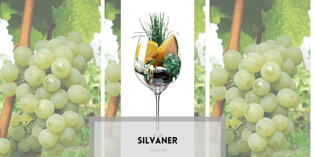 Silvaner vino