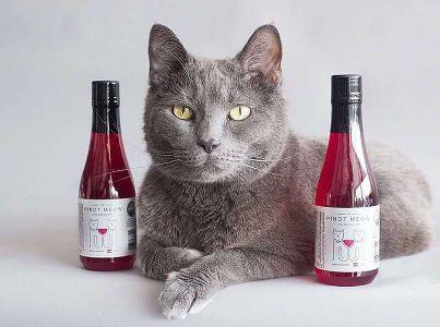 pinot-meow-apollo-vino-gato