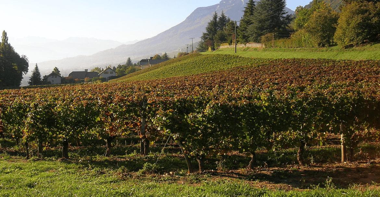 Vinos de Saboya y Buguey