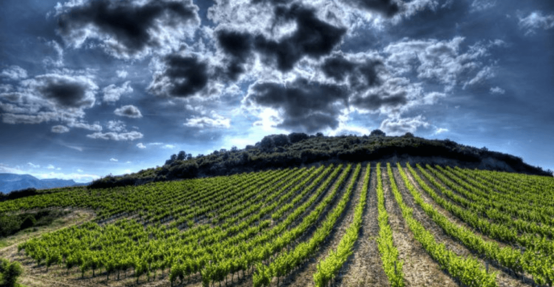 Languedoc-Roussillon vinos