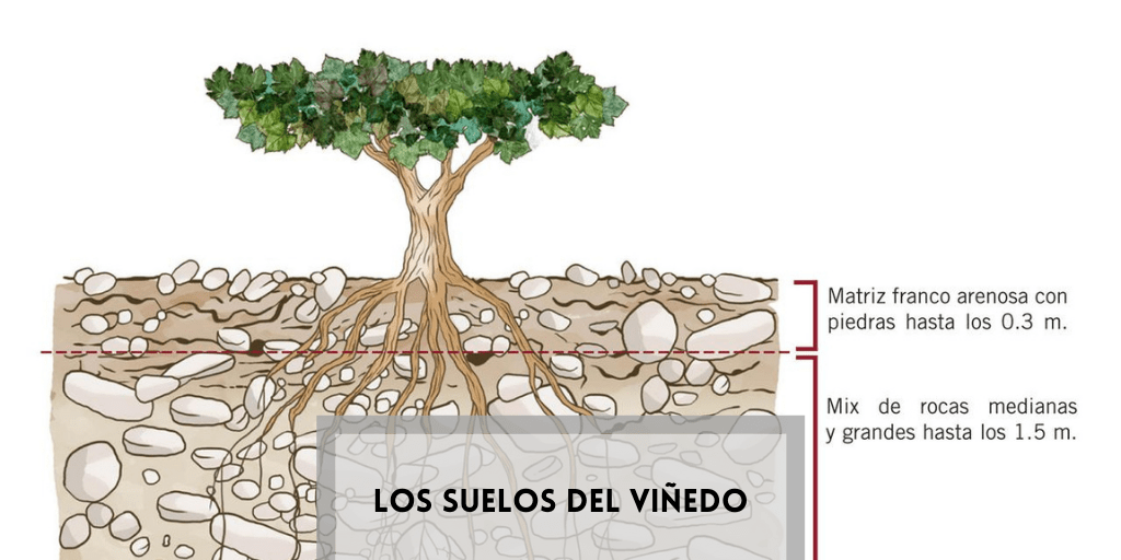 Los suelos del viñedo